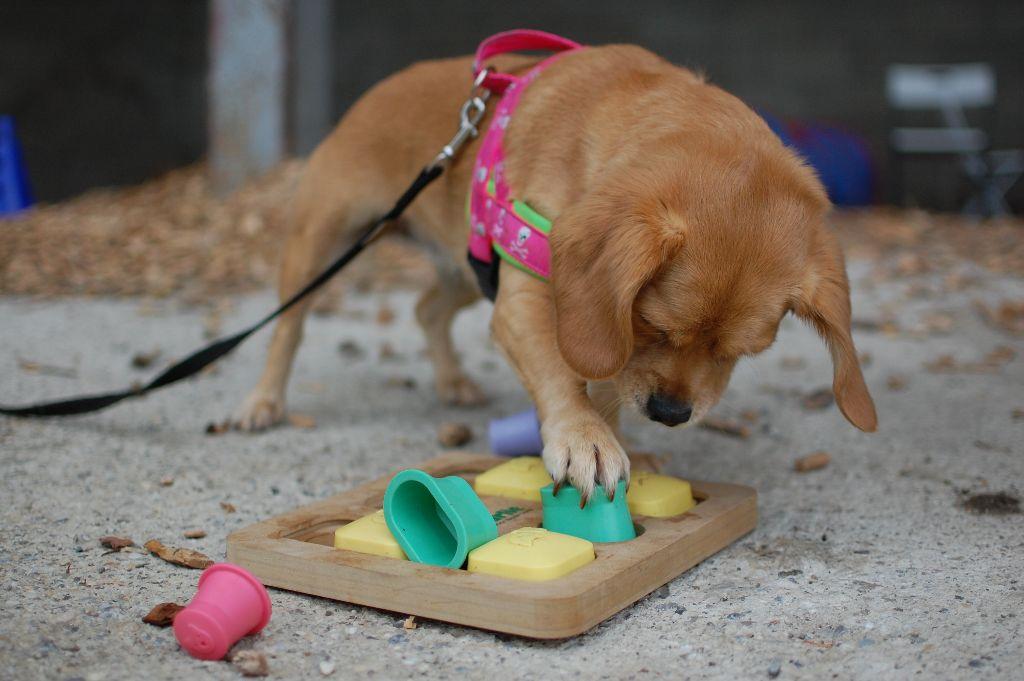 Tipps für Silvester mit dem Hund | DogDialog | Hundeschule Wien
