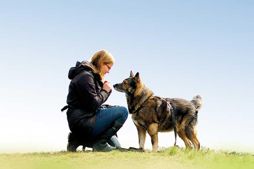 Körpersprache Des Hundes Arbeitsblatt : Die körpersprache des hundes dogdialog hundeschule wien