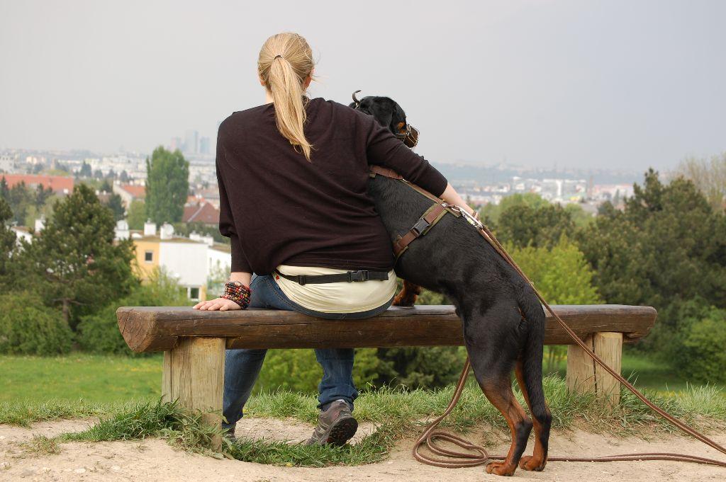 tipps f r silvester mit dem hund dogdialog hundeschule wien. Black Bedroom Furniture Sets. Home Design Ideas